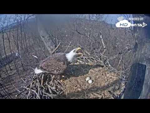 2018 - Hanover, PA Eagles - Intruder Attack!