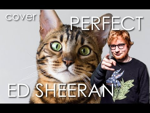 Ed Sheeran - Perfect cover by animals (Cat, Goat & Dog)
