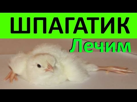 Как исправить шпагат у цыплят видео