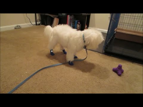 vlog-#502-angry-with-petsmart!-september-6,-2014