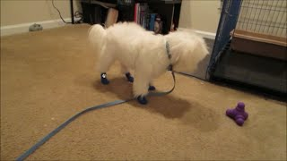 Vlog #502 Angry With Petsmart! September 6, 2014