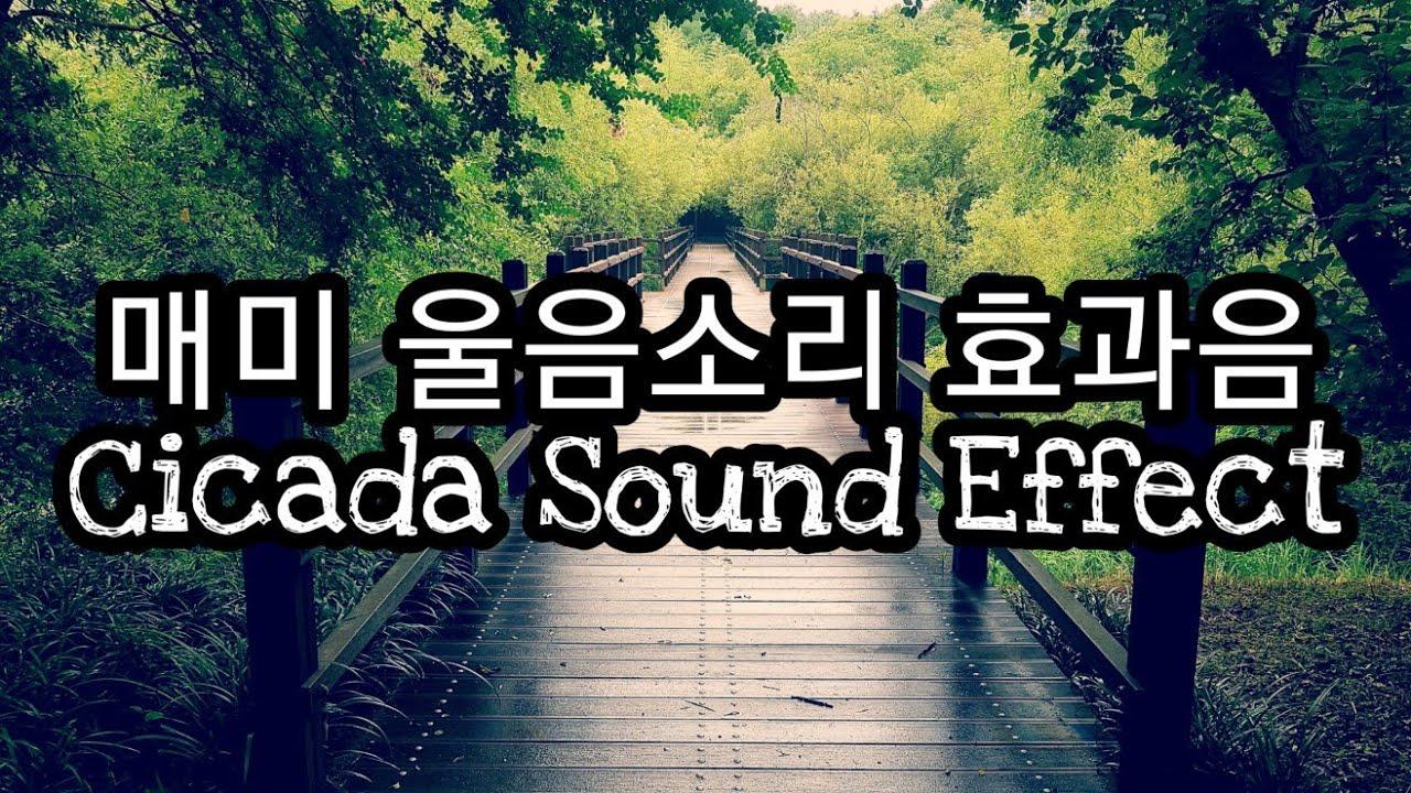 여름 숲속에서 들려오는 매미 울음소리 효과음 Cicada Sound Effect