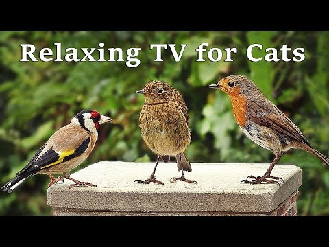 Calming TV for Cats : Cat TV - My Garden Birds - Music for Cats (Nature Sounds)