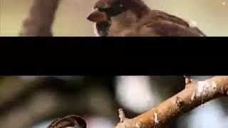 Allah a küşmüş bir serce kuşu