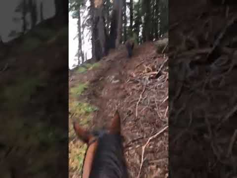 Trinity Alps Hunting Blacktail 2018