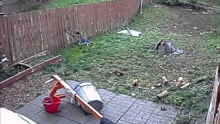 Two Pit Bulls Run into Each Other Thumbnail