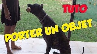 Comment apprendre à son chien à porter calmement et sans mâchonner