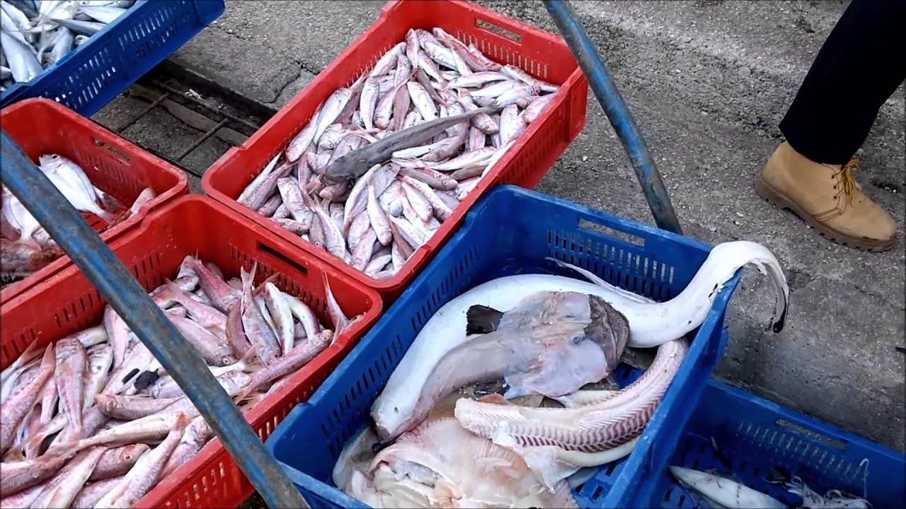 Рыбы адриатического моря фото с названиями