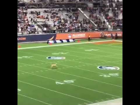 The dog made a world record