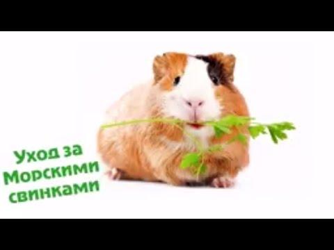 ZooForum: ZooForum