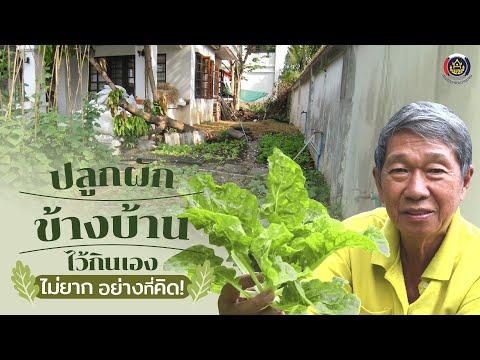 เทคนิคง่ายๆ ปลูกผักข้างบ้านไว้กินเอง ปลอดภัยจากสารพิษ สุขภาพจิตแจ่มใส : Matichon TV