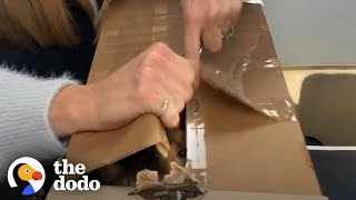 People Find Sealed Boxes Full Of Scared Cats | The Dodo