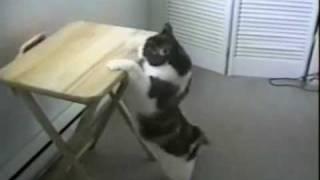 ノソノソと登場した温厚そうなねこちゃんですが、猫の絵だけは激しく気...