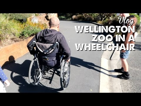 Vlog: Wellington Zoo in a Wheelchair | A Thousand Words