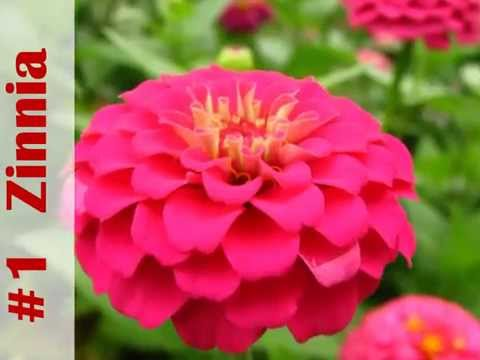Top 10 Annuals to grow this Summer