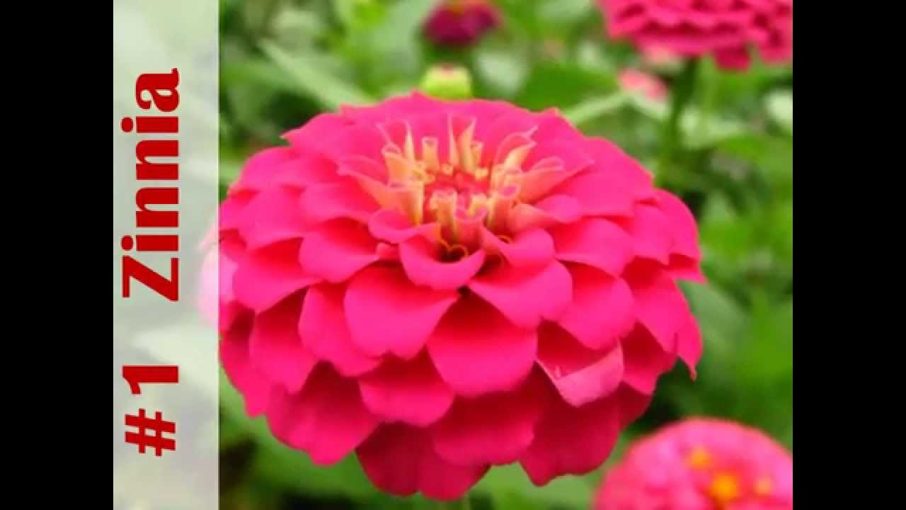 Top 10 annuals to grow this summer youtube izmirmasajfo
