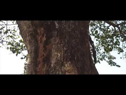Travel video Guwahati (gandhi mandap)