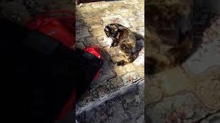 Мама съела котенка? Первая прогулка котят.