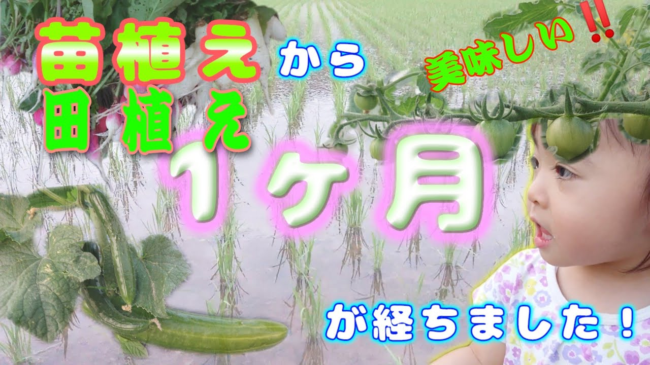 【コシヒカリ・野菜】を各5名にプレゼント