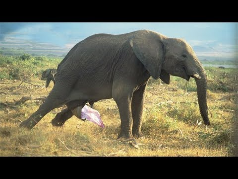 THE FAMILY ELEPHANT IS HAPPY TO WELCOME NEW MEMBER   Reproduction Live In National Park