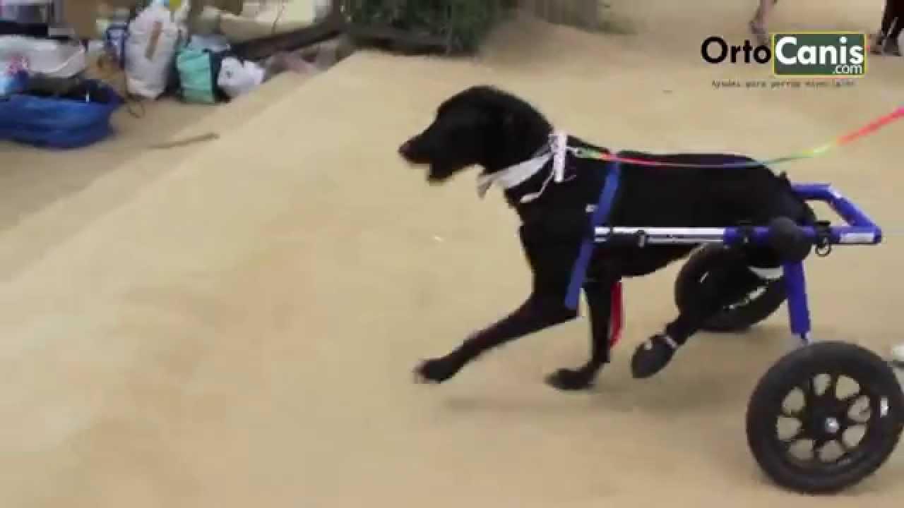 Sillas de ruedas para perros youtube - Ruedas para muebles ...