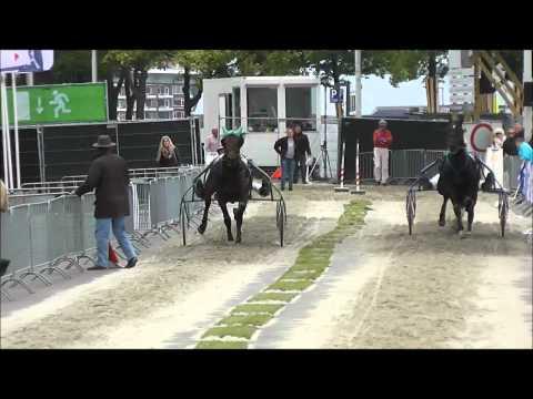 Kortebaan Rotterdam 2012 - De ontknoping