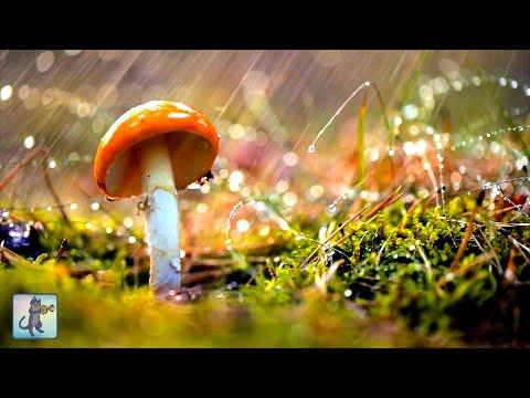 12 HOURS Of Heavy Rain 🌧️ Relaxing Rainfall For Sleep, Insomnia, Meditation & Study (No Thunder)