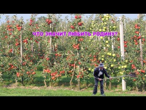 Talyshistan Tv 01.06.2016 News in azerbaijani-turkish: Что значит любить Родину?