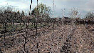 Sadownictwo sadzenie drzew frez sadowniczy sadzarka sadownik z głową .pl sadownikzglowa.pl