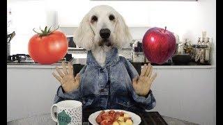 Unicorn Dog Eating Tomato and Apple ASMR