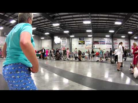 Woman is wearing pyjamas at a dog show