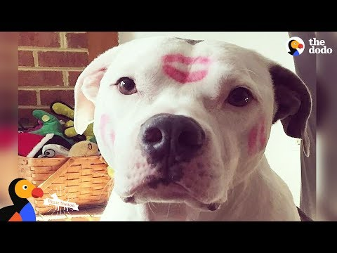 Inspiring Pit Bull Dogs Who Are Survivors | The Dodo Pittie Nation