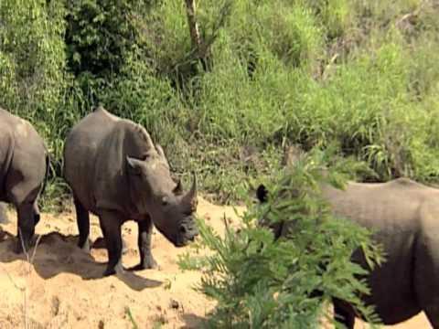 Krüger Nationalpark   Naturreservat in Afrika
