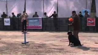 Obedience Dog Show At Iiptf 2011