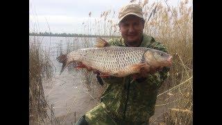 #13 Рыбалка с Берега на Реке Волге Ловля Белого Хищника на Донку Закидушку Голавль