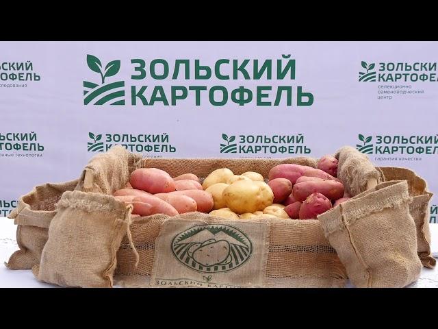 Зольский картофель - производитель элитных семян картофеля