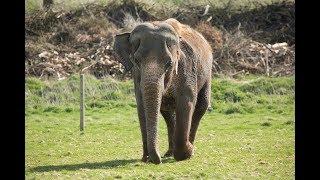 Lucha the elephant visits the dentist thumbnail