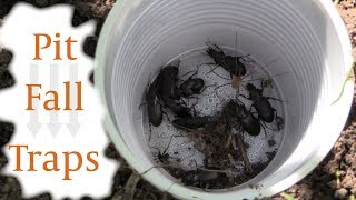 Collecting Insects with Pit Fall Traps