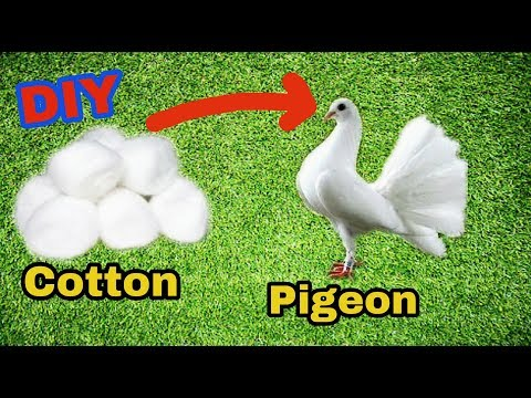 How to make pigeon with cotton at home in hindi | Gk craft