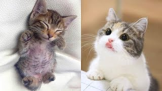 Who's Cuter Than Me? 😻   Cute Cat Video 2019   Kitten Video 2019
