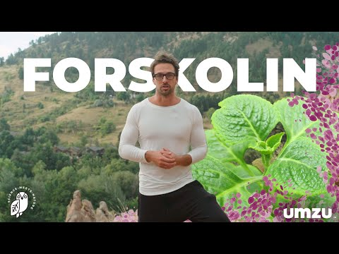 Forskolin Benefits As A Potent Thyroid Support Supplement