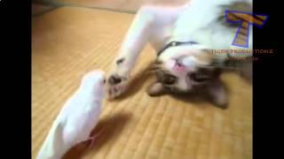 Смешные видео про животных