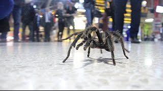 Arachnophobia in Public Prank