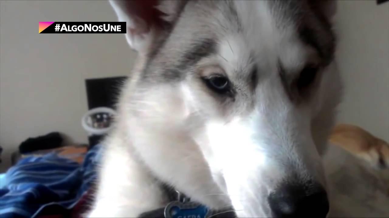 +KOTA presenta: Ventajas de dormir con tu perro
