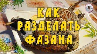 Фазан фото. Как разделать фазана в домашних условиях видео от Petr de Cril'on & SonyKpK
