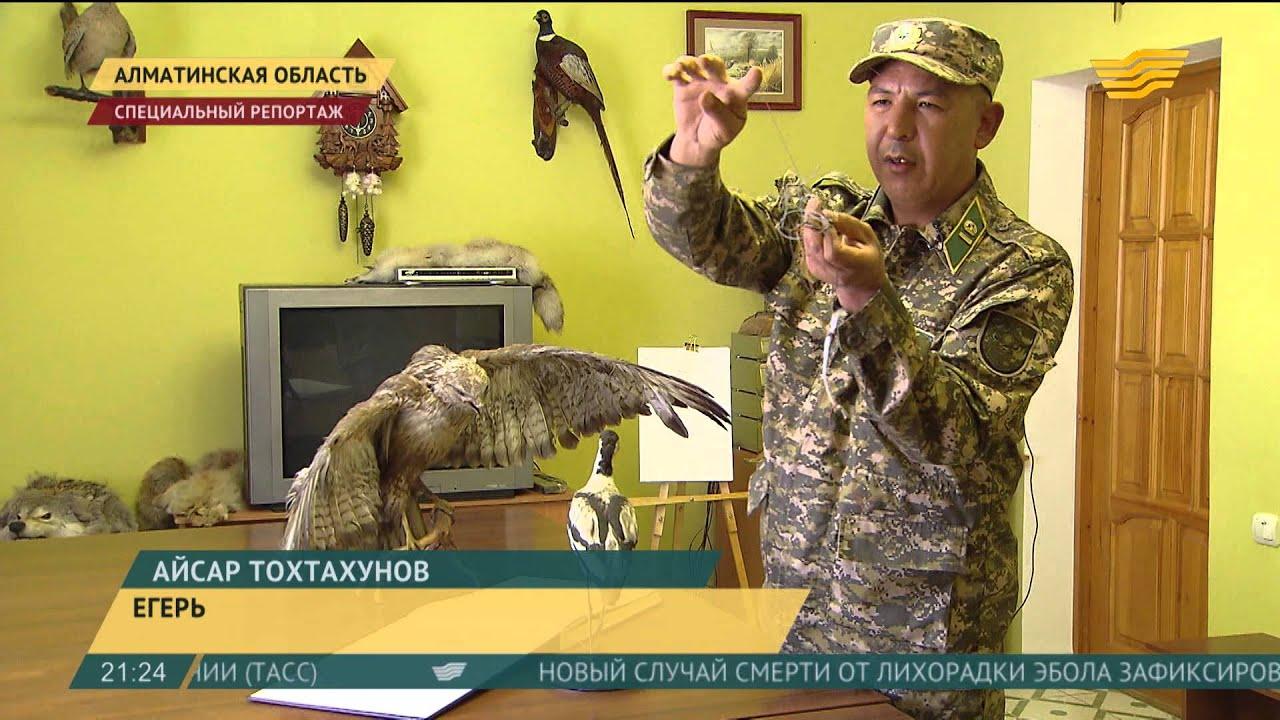 Где в Москве можно посмотреть на ручного филина и ловчих хищных .