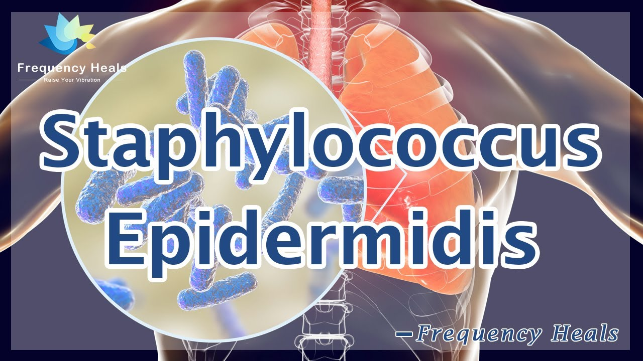 Staphylococcus epidermidis férfiak kenetében