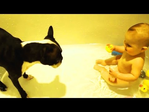 Cute DOGS and BABIES Playing TOGETHER 💕 [Funny Pets]
