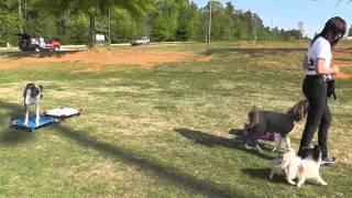 Dog Training: Outside Off-leash Teaching Weaving Through Your Legs & Heel
