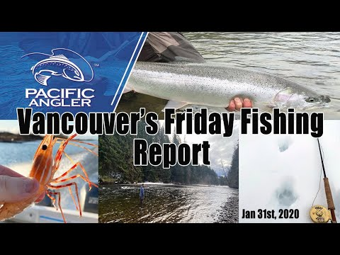 Pacific Angler Vancouver Friday Fishing Report  - Jan 31st, 2020
